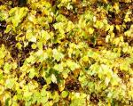 Осень - грусть или ожидание необходимых обновлений